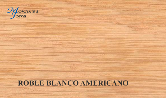 ROBLE BLANCO AMERICANO